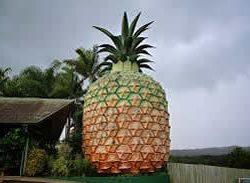 bigpineapple